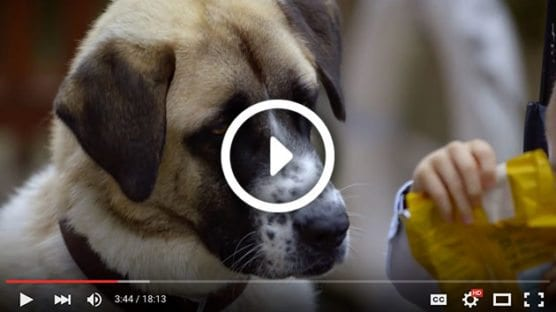 Cats, Dogs and Us - Video