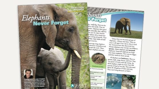 Grades 3-5: Elephants, Never Forget - Lesson Plan