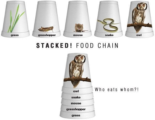 stacked-food-chain